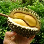 le durian, du gout à l'odeur