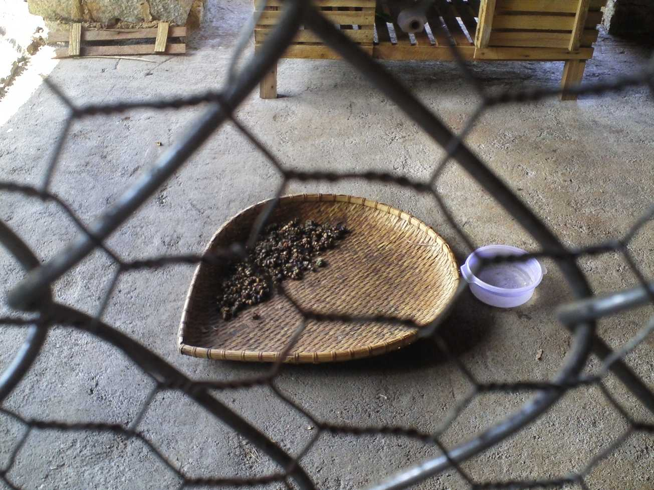 café vietnam kopi luwak (1)